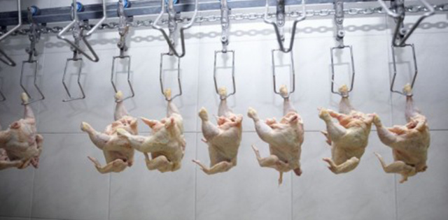 Poultry Solutions